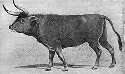 animais extintos auroque