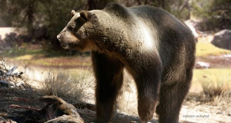 animais extintos urso
