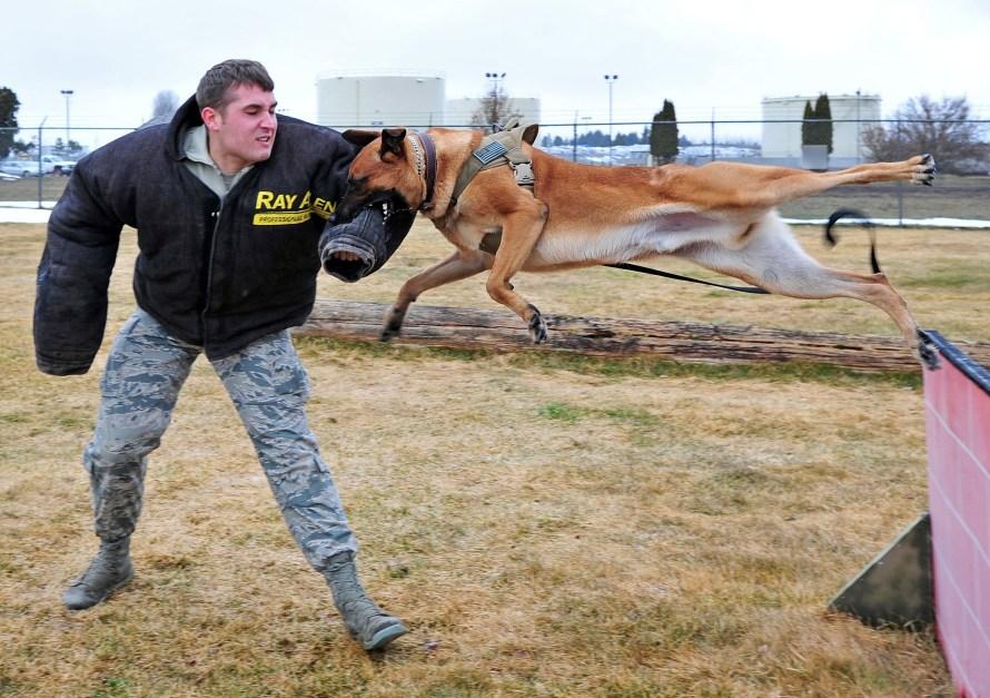 cachorro policial