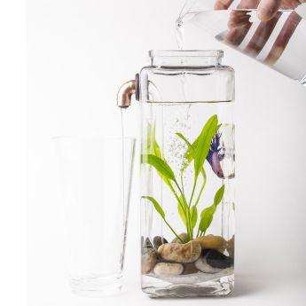 peixe beta aquario