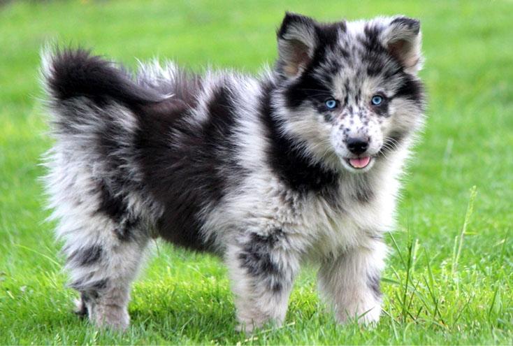 cachorro mais fofo do mundo