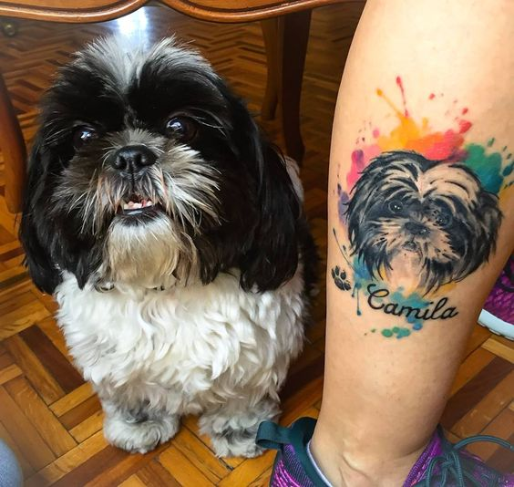 Tatuagem de Shih tzu