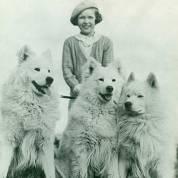 samoieda cachorro historia