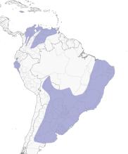 canário da terra distribuição