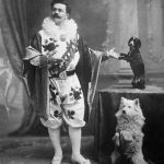 cao esquimo americano circo