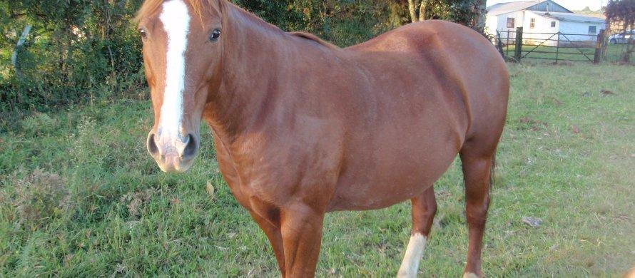 dicas e nomes para cavalos
