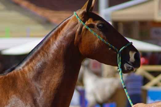 nomes de cavalos famosos