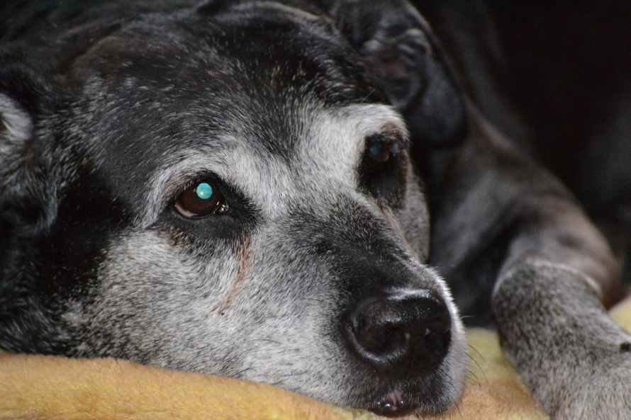 cachorro sente dor com insuficiência renal