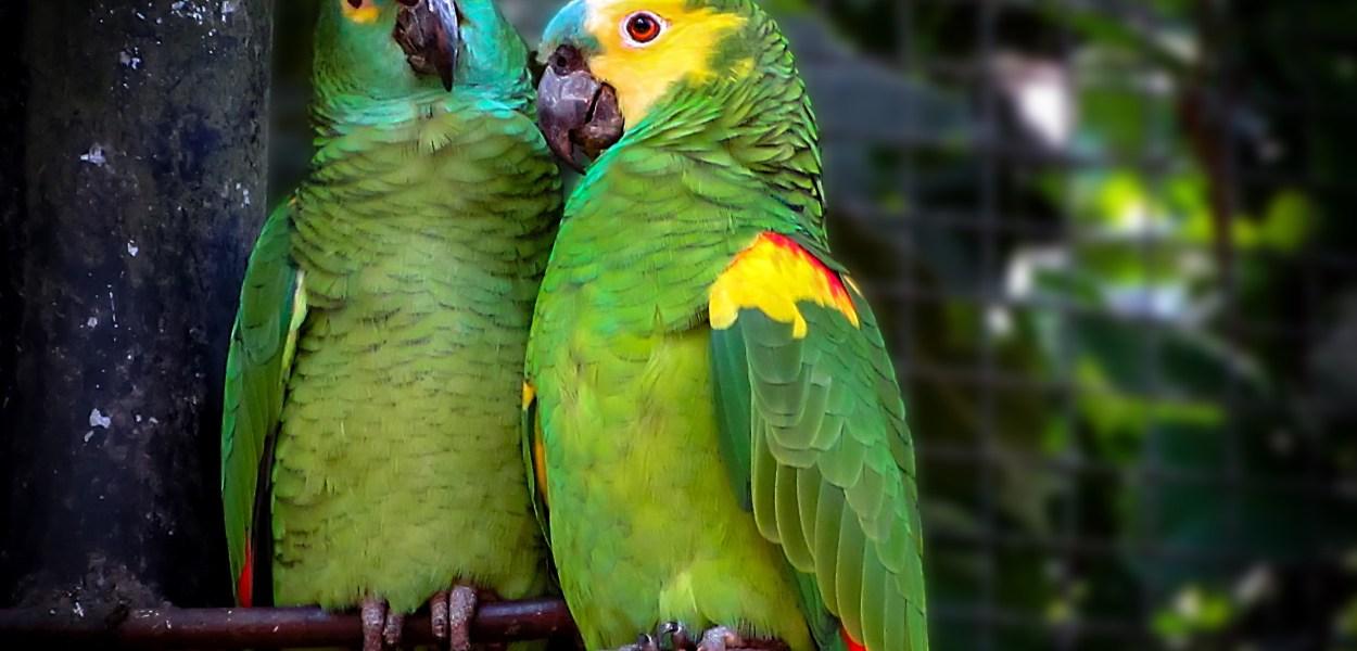 nomes de papagaio