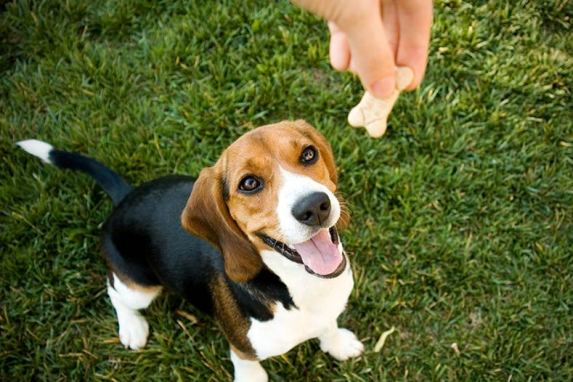 como adestrar o seu cachorro