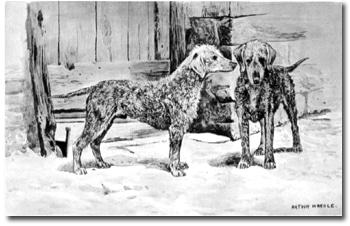 Bedlington Terrier historia