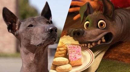 Xoloitzcuintli cachorros viva la vida