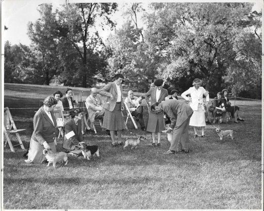 norwich terrier historia american club