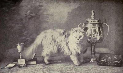 historia do gato persa