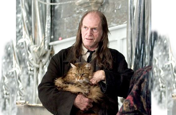 maine coon harry potter