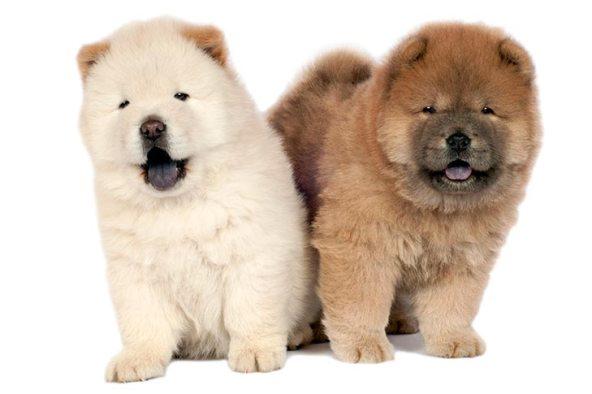 racas de cachorro peludo