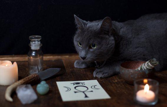 Gato Azul Russo lendas