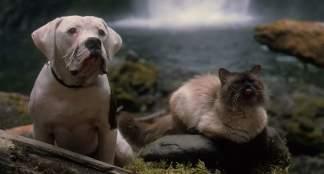 Gato Himalaio filme