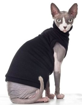 Gato Sphynx roupinha