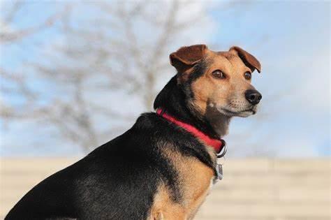 como descobrir a raca do meu cachorro?