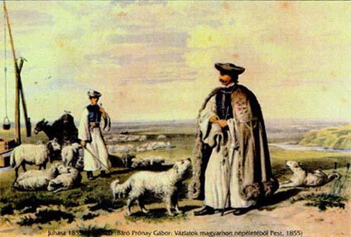 Cachorro Kuvasz 1855