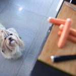 Cachorro pode comer salsicha?