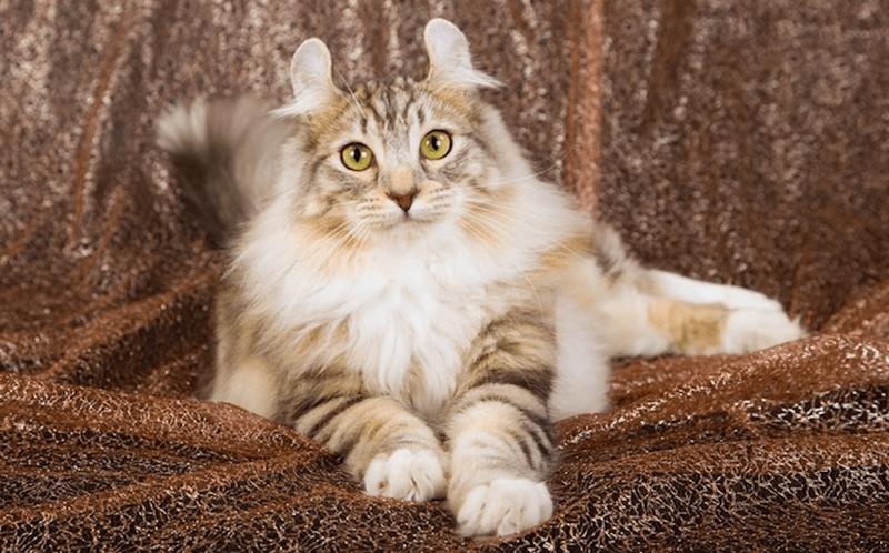 os gatos mais caros do mundo