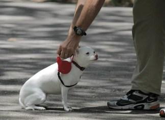 Dog with training leash