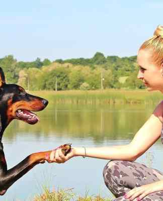 Dog Training Techniques for a well behaved dog