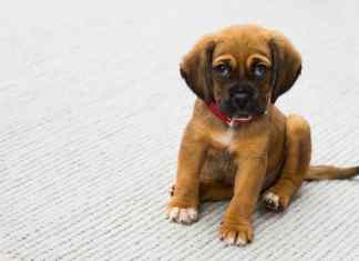 Choosing a training collar for your puppy