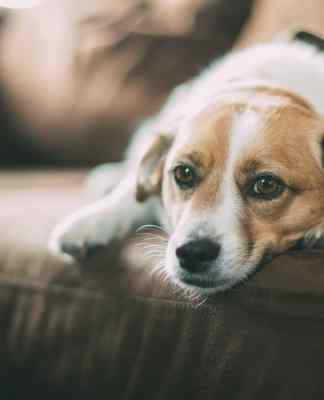 When a dog is unwell