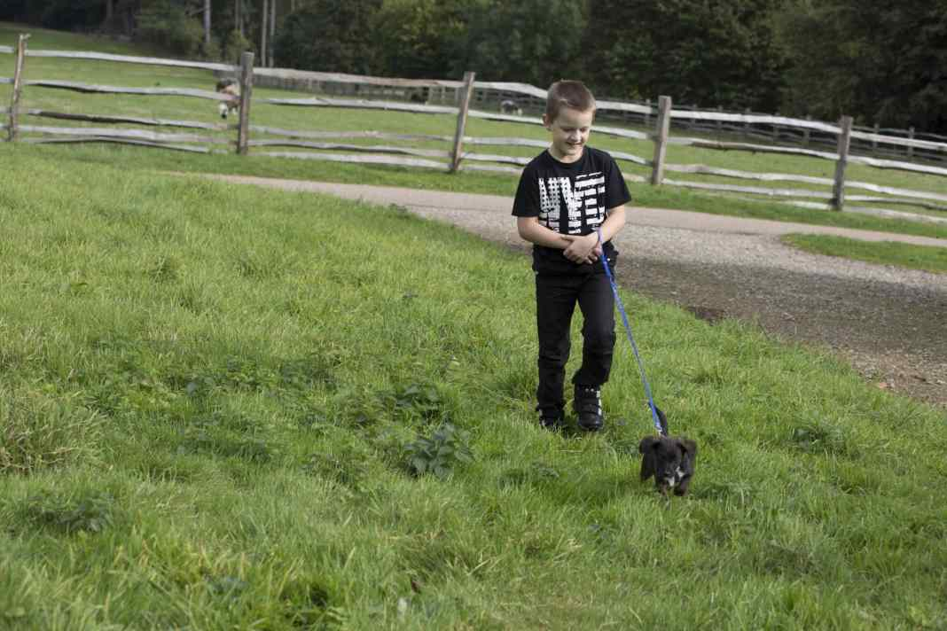 Child leash training a puppy