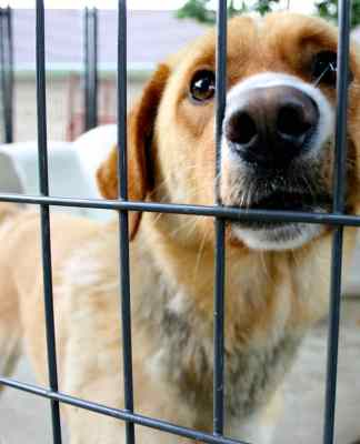 Rescue Dog ready to be adopted
