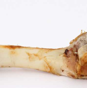 A bone for a dog
