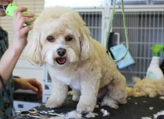 The right dog groomer for your dog
