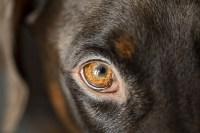 dog-5997842_1920