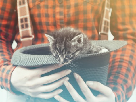 10 Old-Timey Classic Cat Names