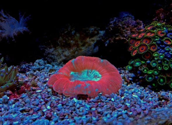5 Hardy Corals for Your First Reef Tank