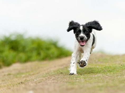 5 Reasons Why Your Dog Runs Away When You Call