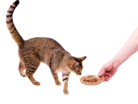 6 Healthy Treat Ideas for Cats