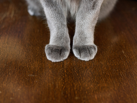 7 Negative Side Effects of Declawing Your Cat