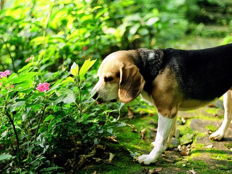 A Pet Guide to Going 'Green'