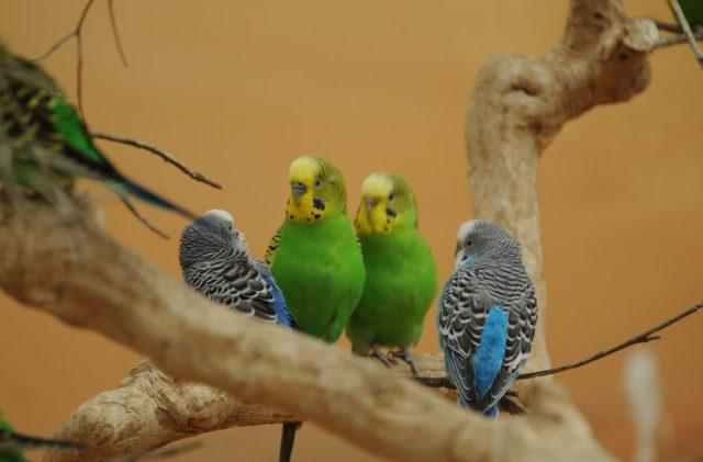 Bird Care 101