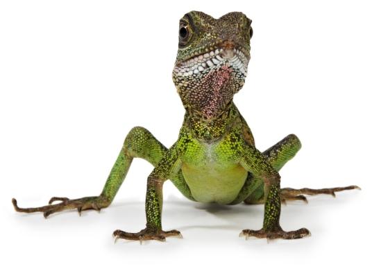 Botulism Reptile - 4 reptile diseases passed to humans