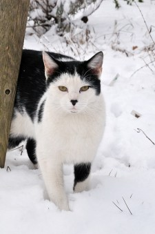Helping Homeless Cats Through the Winter