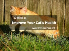 10 Herbs to Improve Your Cat's Health