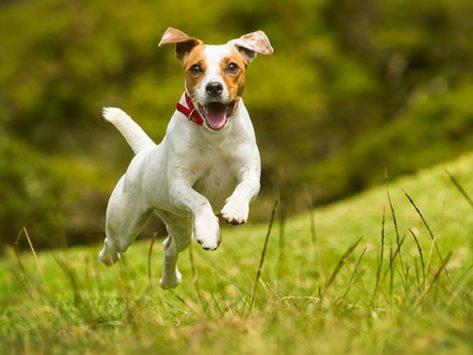 How to Calm a High Energy Dog