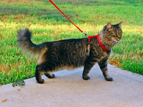How to Walk a Cat (and Live to Tell About It)