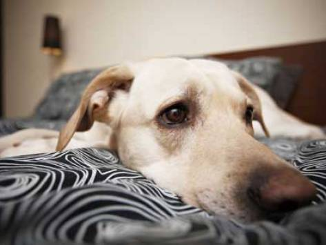 Is Your Dog Depressed?