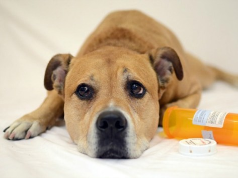 Pet First Aid: Are You Prepared?